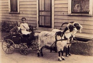 Love this image of a little kid with his nanny dog (pit bull) on a cart pulled by two goats!