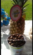 Coconuts.fw
