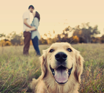 Family-Dog-Focus-Magic-Hour