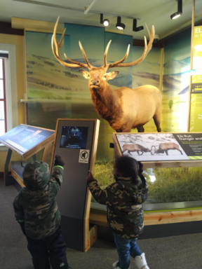 2018 Yellowstone Visitors Center kids taxidermy