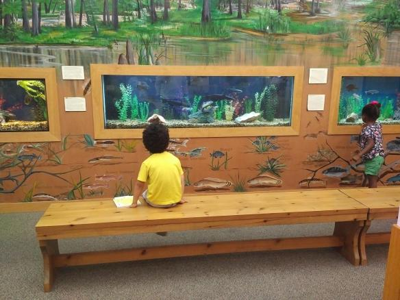 2018 TN Brownsville Delta Heritage Center - aquarium kids