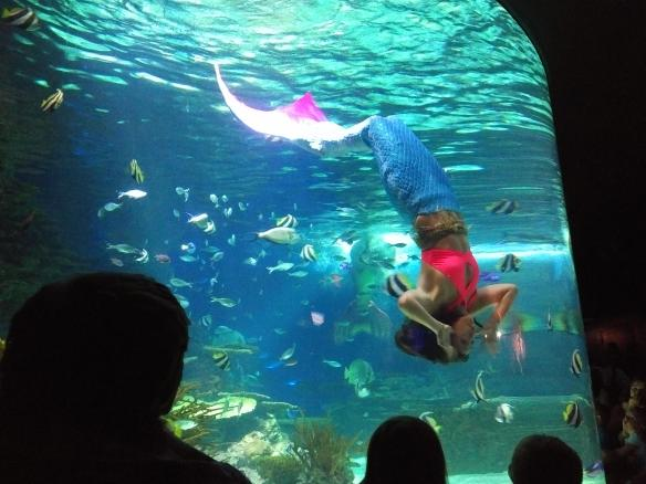 2018 TN Gatlinburg Ripleys Aquarium mermaid show mid spin.jpg