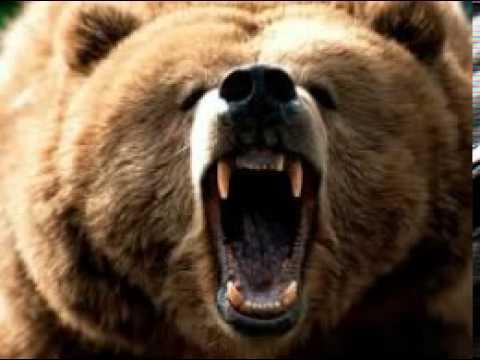 Bear-scary